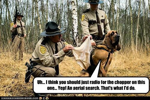 Uh... I think you should just radio for the chopper on this one... Yep! An aerial search. That's what I'd do.