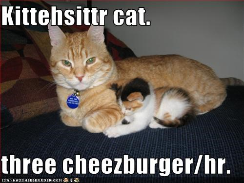 Kittehsittr cat.  three cheezburger/hr.