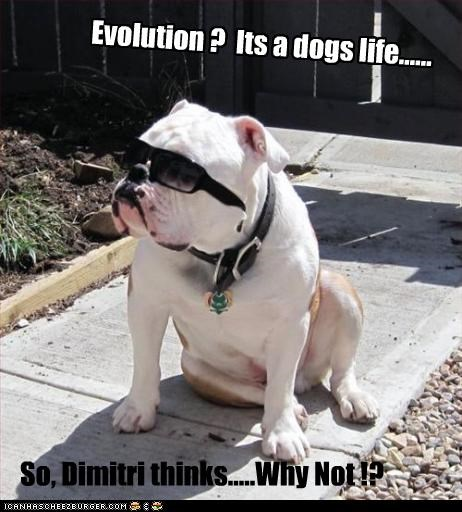 Evolution ?  Its a dogs life......