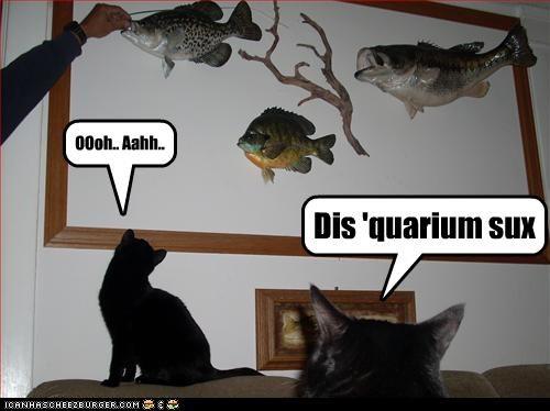 Dis 'quarium sux