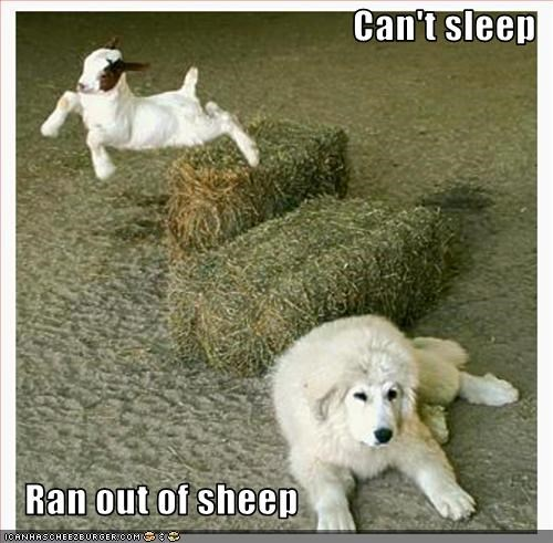 Can't sleep     Ran out of sheep
