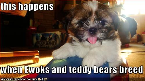 this happens  when Ewoks and teddy bears breed