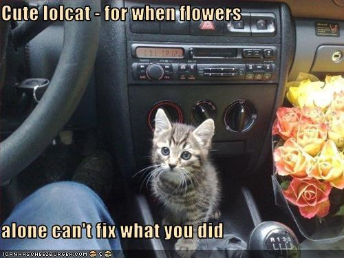 Cute lolcat - for when flowers  alone can't fix what you did