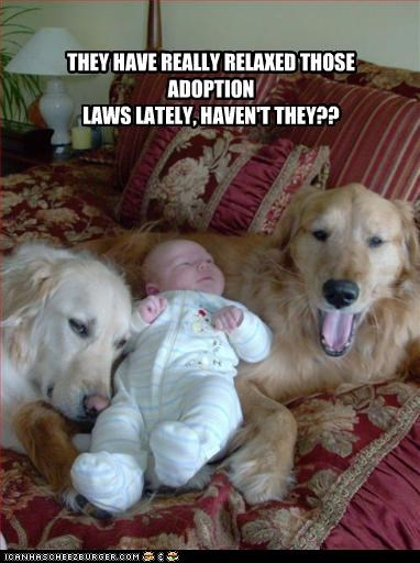 THEY HAVE REALLY RELAXED THOSE ADOPTION  LAWS LATELY, HAVEN'T THEY??