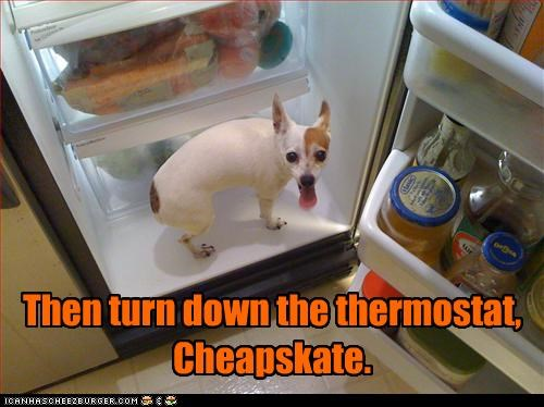 cheap,cold,fridge,hot,refrigerator,thermostat