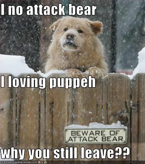 I no attack bear I loving puppeh why you still leave??