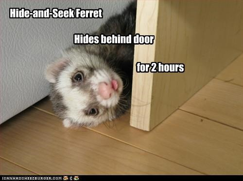 Hide-and-Seek Ferret                                                                 Hides behind door