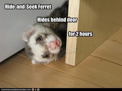 Hide-and-Seek Ferret                                                                 Hides behind door
