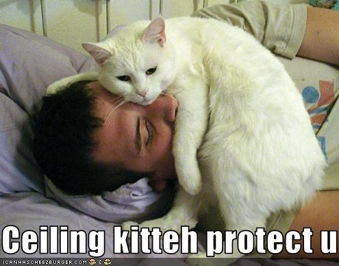 Ceiling kitteh protect u