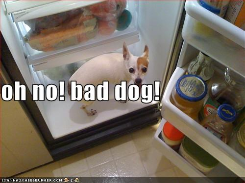 oh no! bad dog!