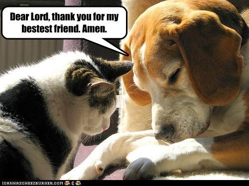 Dear Lord, thank you for my bestest friend. Amen.