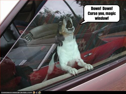 cars,down,magic,rat terrier,window
