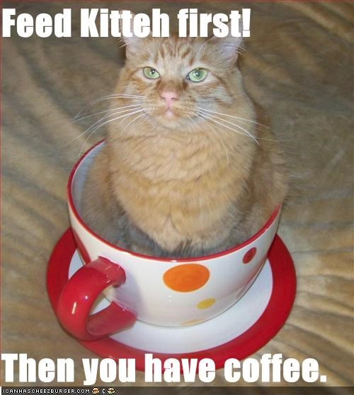 Feed Kitteh first!  Then you have coffee.