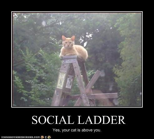 haughty,ladder