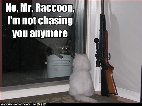 No, Mr. Raccoon, I'm not chasing you anymore