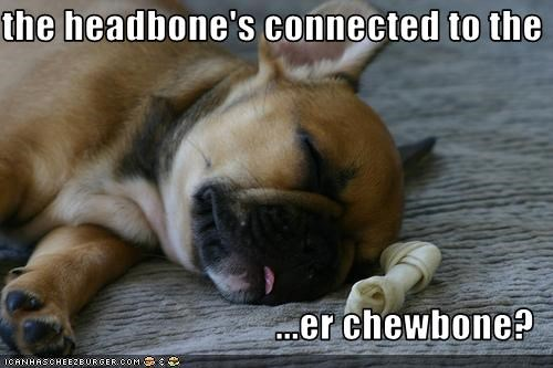 the headbone's connected to the  ...er chewbone?