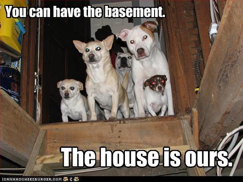 basement,chihuahua,house,pitbull,stairs