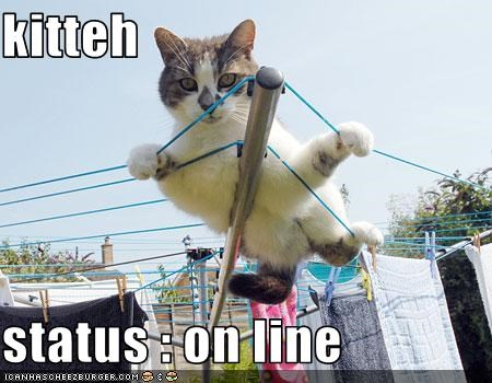 kitteh  status : on line