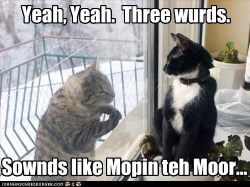 door,cold,winter,Cats