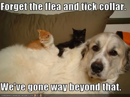 Forget the flea and tick collar.  We've gone way beyond that.