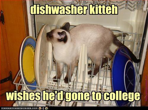 me, too, kitteh...me, too