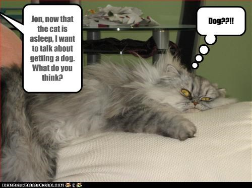 Jon, now that the cat is asleep, I want to talk about getting a dog. What do you think?