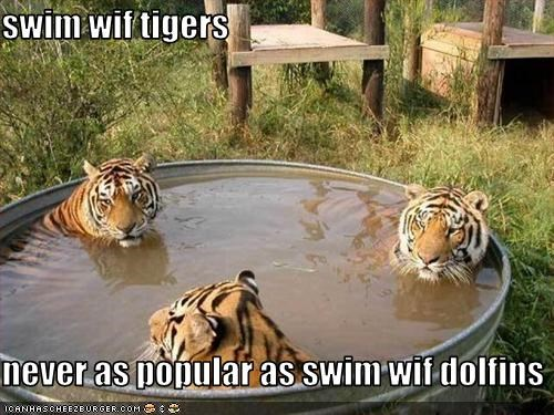 swim wif tigers  never as popular as swim wif dolfins