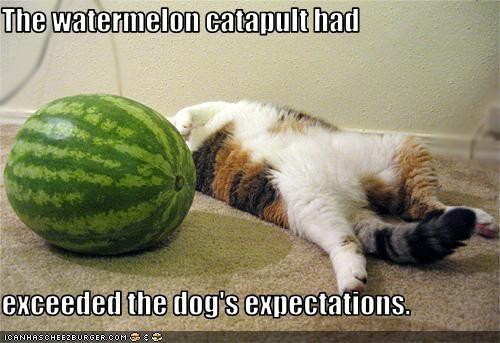 catapult,dogs,murder,watermelon