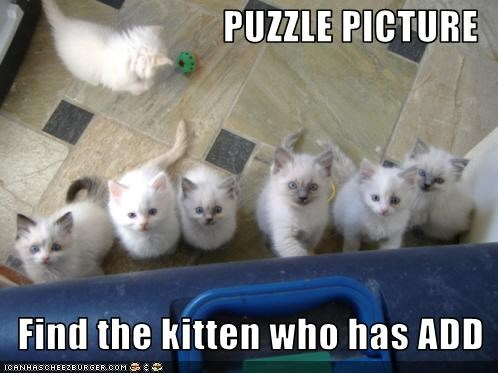 PUZZLE PICTURE    Find the kitten who has ADD