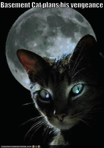Basement Cat plans his vengeance