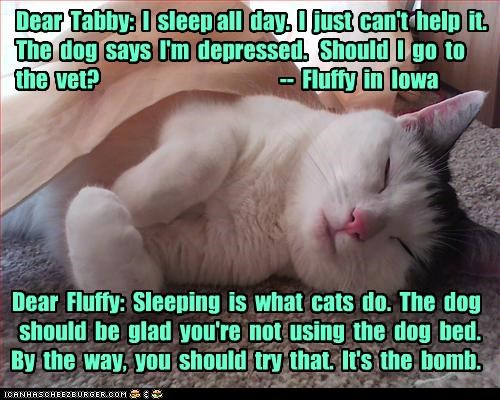 Dear  Tabby:  I  sleep all  day.  I  just  can't  help  it.  The  dog  says  I'm  depressed.   Should  I  go  to the  vet?                                           --  Fluffy  in  Iowa