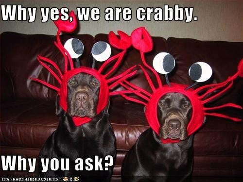 Why yes, we are crabby.  Why you ask?
