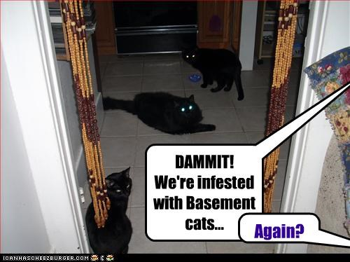 DAMMIT!  We're infested with Basement cats...