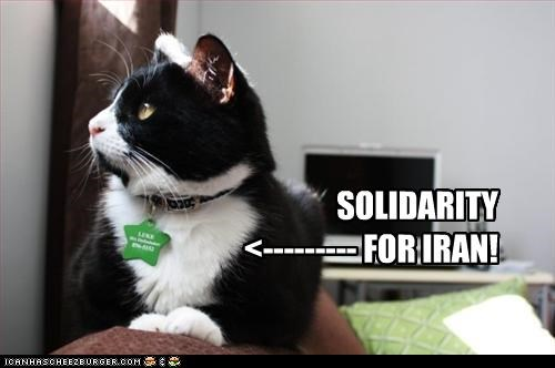 Cat Solidarity for Iran