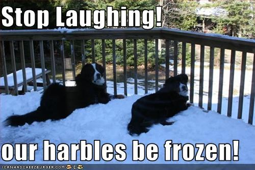 Stop Laughing!  our harbles be frozen!