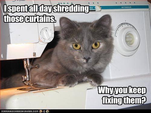 I spent all day shredding those curtains.