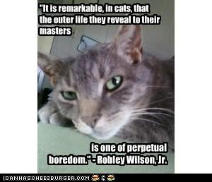 """It is remarkable, in cats, that the outer life they reveal to their masters"