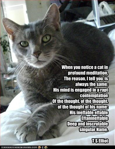 When you notice a cat in profound meditation, The reason, I tell you, is always the same: His mind is engaged in a rapt contemplation Of the thought, of the thought, of the thought of his name: His ineffable effable Effanineffable Deep and inscrutable sin