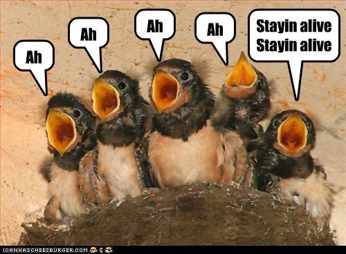 Tweeters