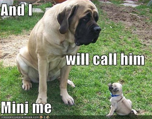 And I  will call him Mini me