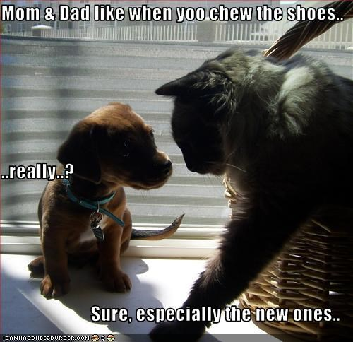 chew,dad,kitteh sez,like,mom,puppy,shoes,whatbreed