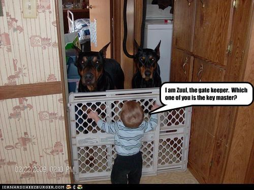 baby,doberman pinscher,gate,Ghostbusters,guard dog,human,keys,movies