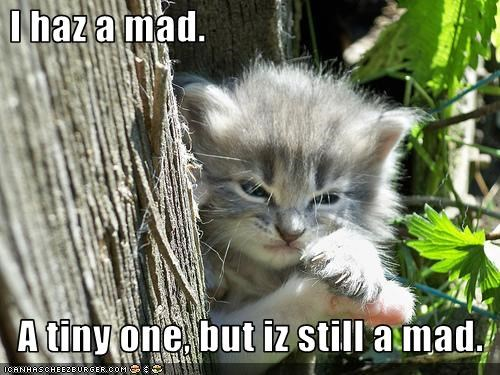 I haz a mad.    A tiny one, but iz still a mad.