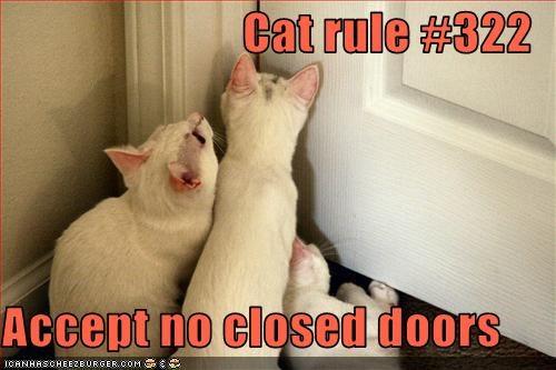 Cat rule #322  Accept no closed doors