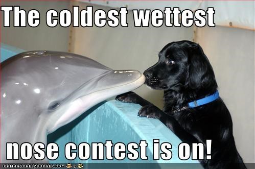 The coldest wettest     nose contest is on!