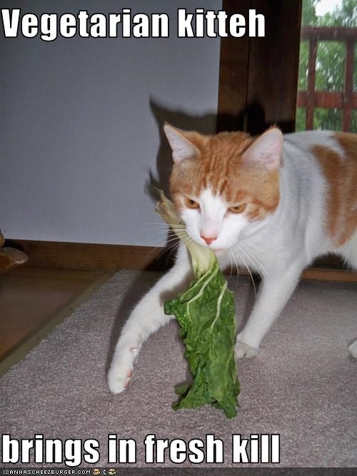Vegetarian kitteh  brings in fresh kill