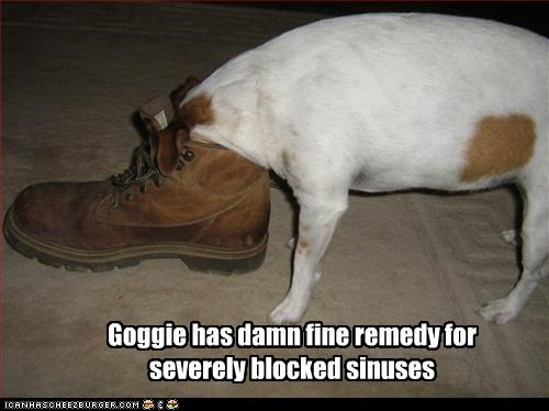 Goggie has damn fine remedy for severely blocked sinuses