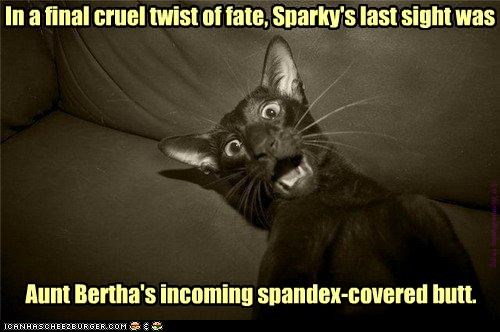 Alas, poor Sparky...