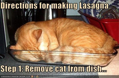 annoying,ginger,instructions,lasagna,nap,nom nom nom