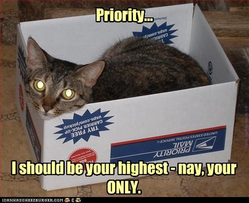 kitteh wants you to get your priorities straight!